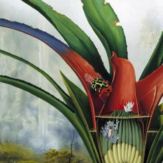 Bromeliad: Kaieteur Falls art for sale